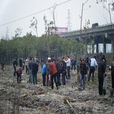 温州华美瓯海区春季植树活动