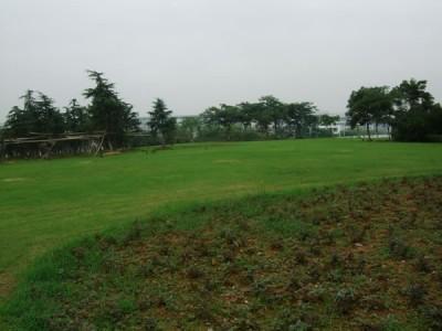 温州市高教园区中心区绿化养护工程
