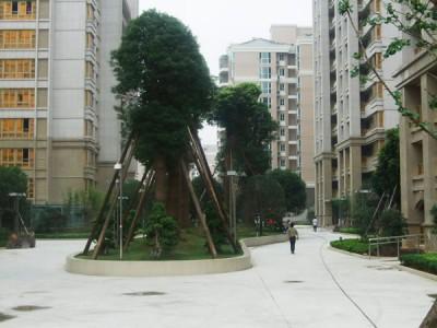 中通青青家园景观绿化工程